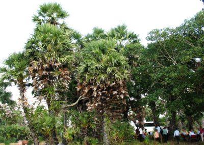 Дегустація місцевого напою на основі кокосового молока